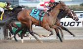 Normandy Invasion is 2013 contenders the Kentucky Derby